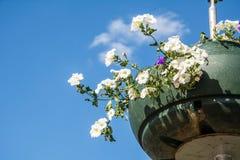 Rote Gartenpelargonienblumen, Abschluss herauf Schuss/Pelargonie blüht,/Lavatera-/Sommerpetunienblumen in der Zeit des Gartens im Lizenzfreies Stockbild