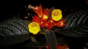 Rote gelbe Blume Stockfotos