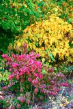 Rote, gelbe und grüne Herbstbüsche vertikal Lizenzfreies Stockbild