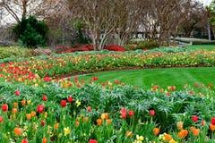 Rote, gelbe und orange Tulpen und Narzissen in manikürtem Garten Lizenzfreies Stockbild