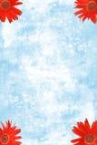 Rote Gerbera-Gänseblümchen in den Ecken mit blauem Wasser Lizenzfreie Stockbilder