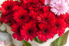 Rote Gerberablumen am Amsterdam-Blumenmarkt Stockfoto