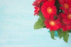 Rote Gerberablumen auf blauem Hintergrund Lizenzfreie Stockfotografie