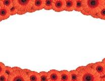 Rote Gerberablumen schaffen einen Rahmen auf weißem Hintergrund Lizenzfreies Stockbild