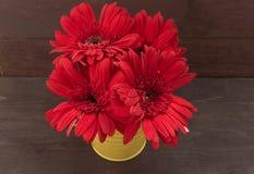 Rote Gerberablumen sind im Blumentopf, auf dem hölzernen backgrou Stockfotografie