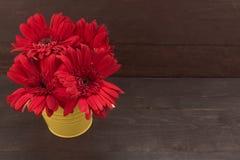 Rote Gerberablumen sind im Blumentopf, auf dem hölzernen backgrou Stockfotos