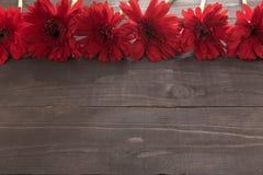 Rote Gerberablumen sind im hölzernen Hintergrund Stockfoto