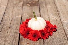 Rote Gerberagänseblümchen schellen einen geschnitzten weißen Casper-Kürbis Stockfotos