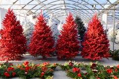 Rote gespritzte Weihnachtsbäume stockfoto