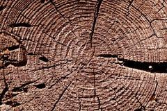rote getonte alte Baumschnittbeschaffenheit Lizenzfreies Stockbild