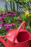 Rote Gießkanne im Garten nach Regen Lizenzfreie Stockbilder