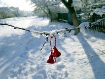 Rote Glocken auf asnow-bedeckter Niederlassung einer Fichte Stockfoto