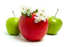 Rote, grüne Äpfel und Blumen Lizenzfreie Stockfotografie