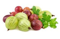 Rote grüne Stachelbeere auf Weiß lizenzfreies stockfoto