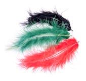 Rote grüne und schwarze Federn getrennt auf Weiß Stockfoto