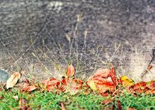 Rote Grasblätter mit schwarzem konkretem Boden lizenzfreie stockfotografie