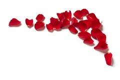 Rote Grenze des rosafarbenen Blumenblattes Lizenzfreie Stockfotos