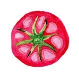 Rote große Tomate des Aquarells Stockfotos