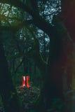 Rote Gummistiefel im Wald Lizenzfreies Stockbild