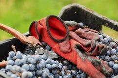 Rote Handschuhe und alte Baumschere in einer schmutzigen Kiste mit Merlot gruppiert sich Lizenzfreie Stockfotos