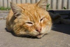 Rote Hauptkatze, die in der Sonne schläft stockbild