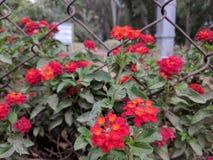 Rote helle Blumen Stockfoto