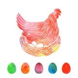 Rote Henne auf Nest und Eiern Stockfotos