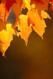 Rote Herbst-Blätter Lizenzfreies Stockfoto