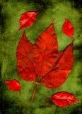 Rote Herbstblätter Stockfoto