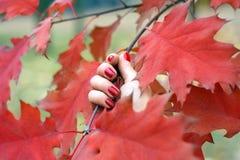 Rote Herbstblätter in einer Hand Stockfoto