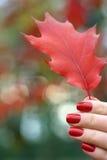 Rote Herbstblätter in einer Hand Lizenzfreie Stockfotografie