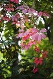 Rote Herbstefeublätter auf grünem Weichzeichner Stockbilder