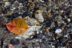 Rote herbstliche Blätter Stockfotos