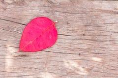 Rote, Herz-förmige Blätter, auf dem Hintergrund des Holzes Stockfotografie