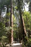 Rote Holzbäume Stockbilder