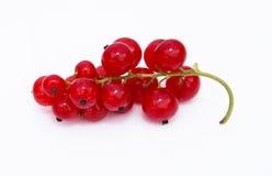 Rote Johannisbeere Stockbild