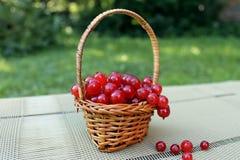 Rote Johannisbeere in einem Korb. Stockfotografie