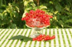 Rote Johannisbeere in einer Glasschüssel Lizenzfreies Stockbild