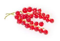 Rote Johannisbeere getrennt auf Weiß Stockfoto