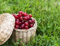 Rote Johannisbeere im Weidenkasten Lizenzfreie Stockfotos