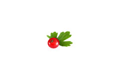 Rote Johannisbeere mit dem Blatt lokalisiert auf weißem Hintergrund lizenzfreie stockfotos