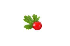 Rote Johannisbeere mit dem Blatt lokalisiert auf weißem Hintergrund stockbild