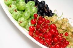 Rote Johannisbeere, schwarze Johannisbeere, Stachelbeeren Lizenzfreies Stockfoto