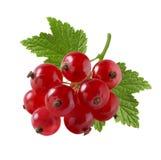 Rote Johannisbeere sehr klein auf weißem Hintergrund Stockbild