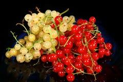 Rote Johannisbeere und weiße Korinthe stockbilder