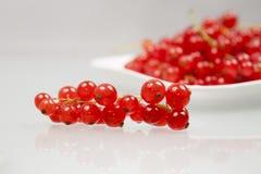 Rote Johannisbeeren auf einer weißen Platte Lizenzfreie Stockbilder
