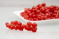 Rote Johannisbeeren auf einer weißen Platte Lizenzfreies Stockfoto