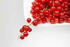 Rote Johannisbeeren auf einer weißen Platte Lizenzfreie Stockfotos