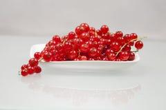 Rote Johannisbeeren auf einer weißen Platte Stockbilder