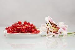 Rote Johannisbeeren auf einer weißen Platte und einer rosa Lilie Lizenzfreie Stockfotografie